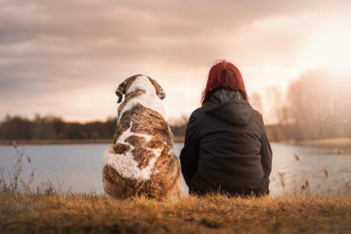 perro y leishmaniasis