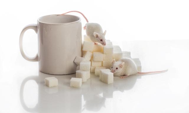 ratones azúcar