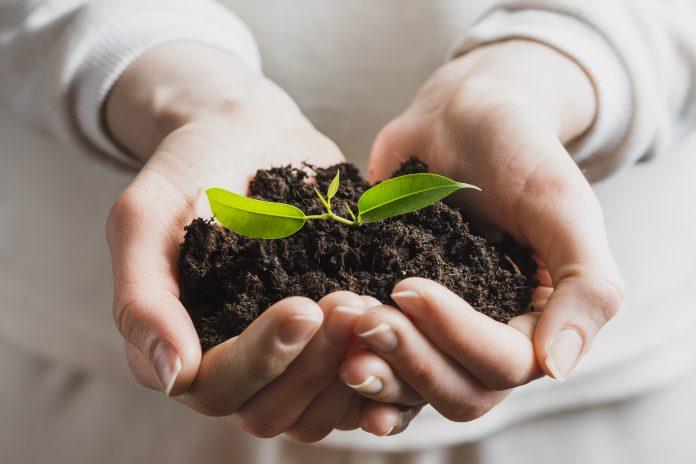 semillas y seguridad