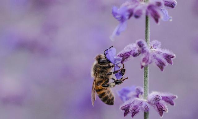 competencia numérica abejas